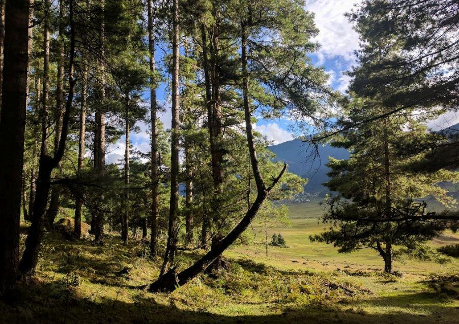 Bhutan Sport Forest View