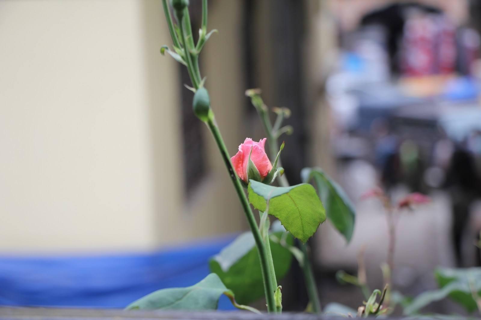 amira flowers