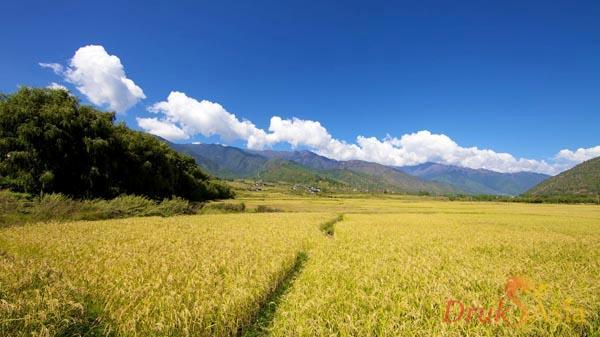 Best Time To Visit Bhutan Bhutan Travel Tour Druk Asia